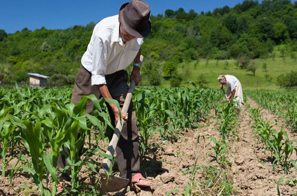 Direitos trabalhistas do trabalhador rural