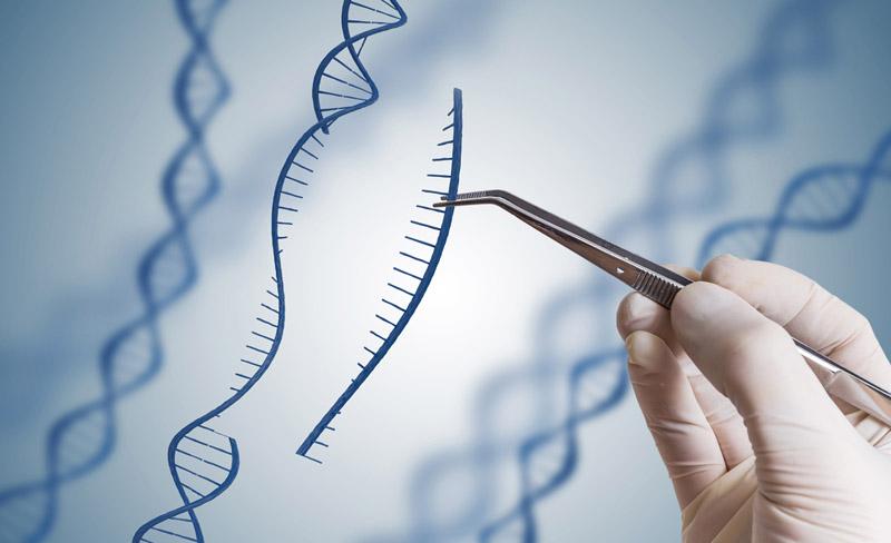 Lei de Biotecnologia